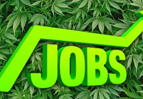 Legal Marijuana Industry Has Jobs That Pay $50K to $90K